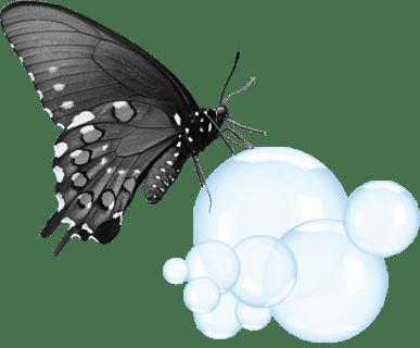 Papillon sur bulles